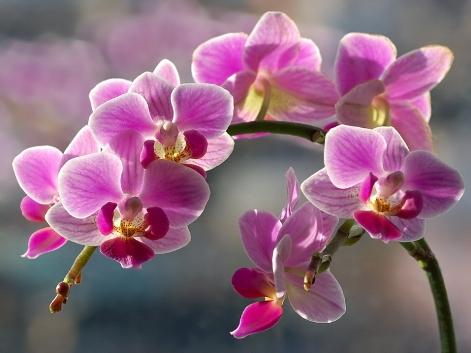 Секреты по уходу за орхидеями