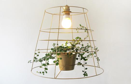 Лампа и фотосинтез