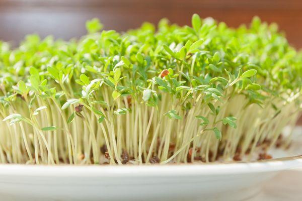 5 видов зелени, которые несерьезно вырастить на подоконнике