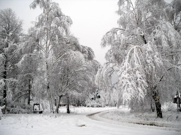 Как выжить без  электричества во занесенной снегом деревне