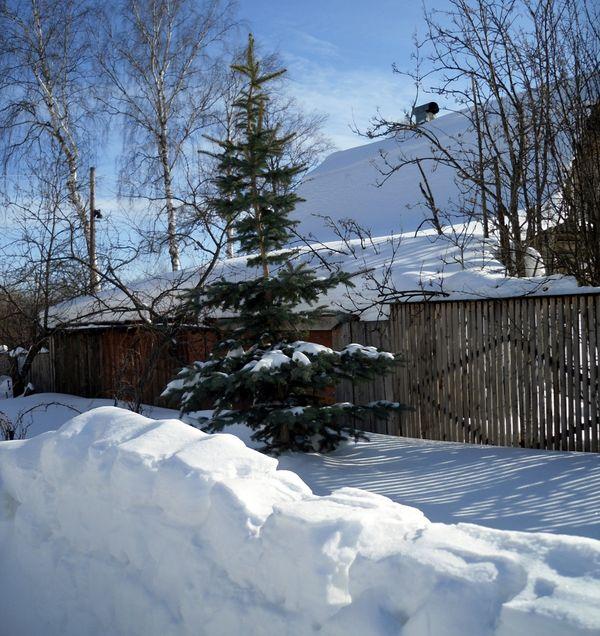 Каникулы на зимней даче в  мечтах и в  реальности