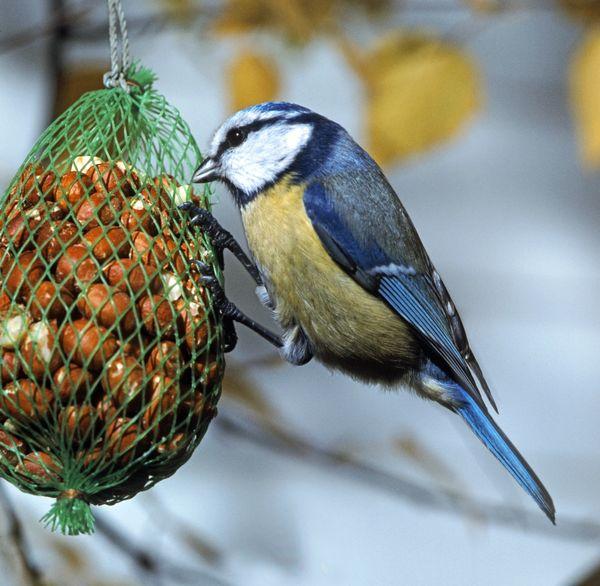 7 идей несложных птичьих кормушек