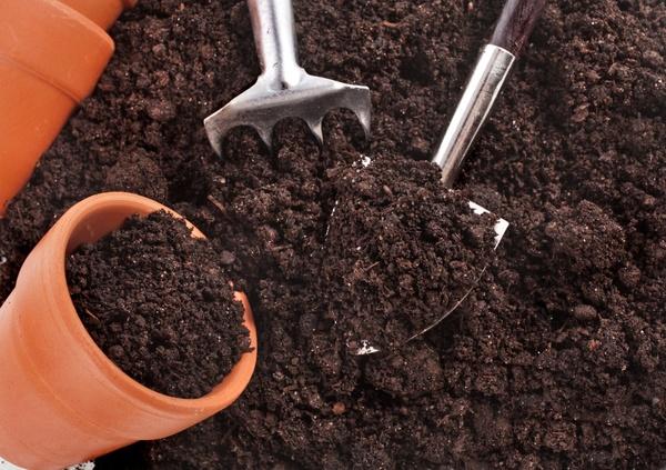 Сезонные работы в  саду и огороде: капут января – зачаток февраля