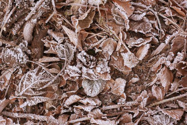 Где зимуют садовые и огородные вредители и сколь их обезвредить