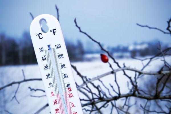 5 распространенных мифов обо зимнем укрытии растений